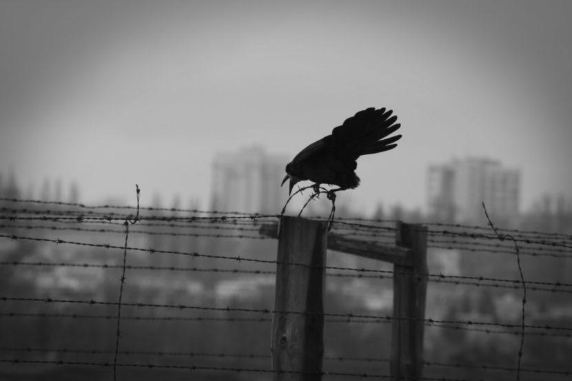 mahnender-Vogel-über-Konzentrationslager.jpg